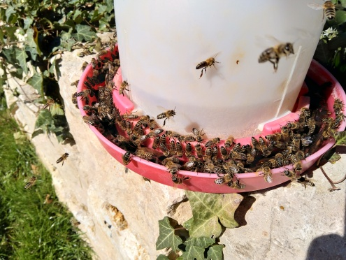 Bienentränke im März